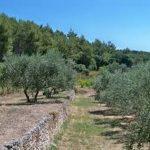 restanques-et-oliviers